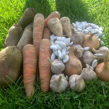 Warzywa Eko Buraki Cebula Mąka Marchewka Seler Fasola Czosnek GRATIS