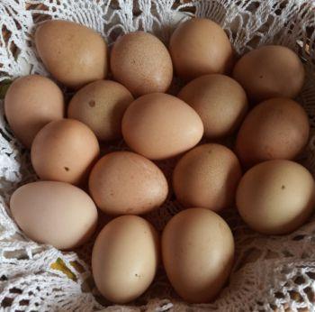 Jaja od perliczki