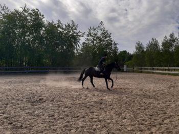 Kurs na instruktora jazdy konnej