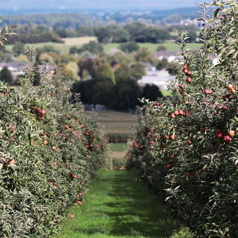 Drzewka i krzewy owocowe