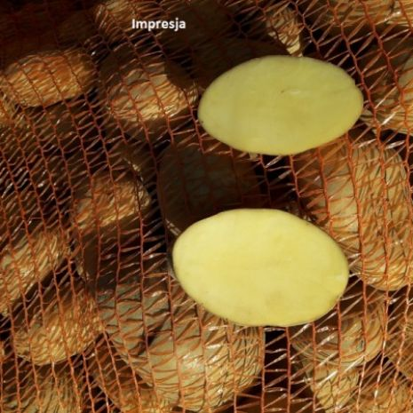 Ziemniaki odmiana Bellarosa, Ignacy, Impresja
