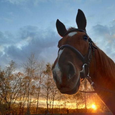 Hotel dla koni