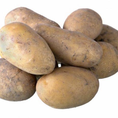 ziemniaki sadzeniak kwalifikat klasa B