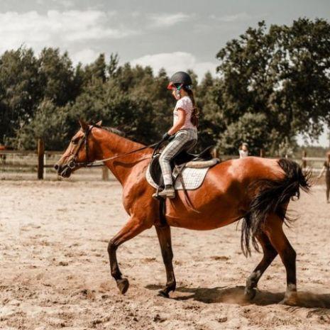 Trening z końmi metodami naturalnymi