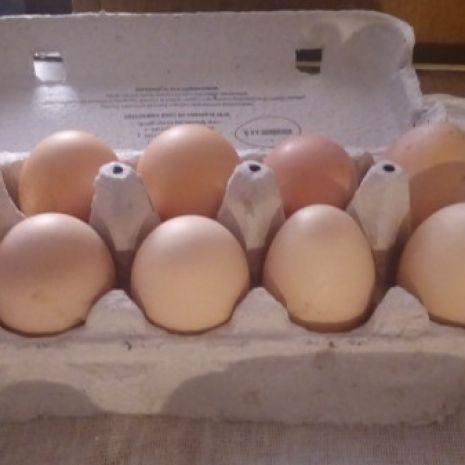 Świeże jaja z wolnego wybiegu