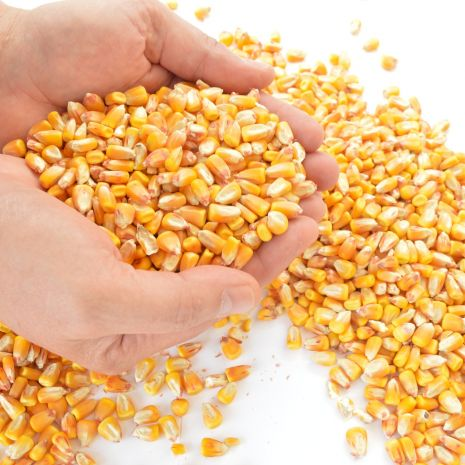 Kukurydza sucha workowana