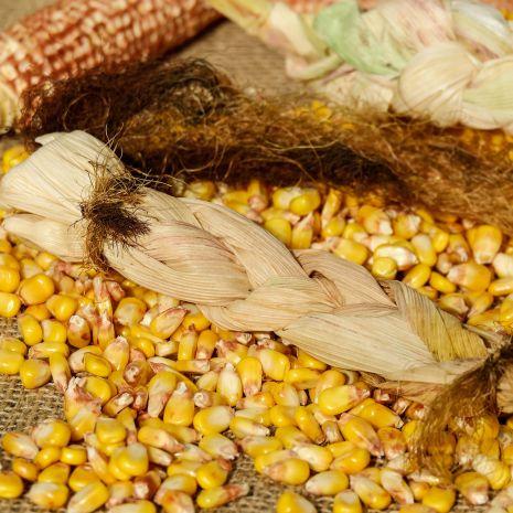 Kukurydza drobna np. dla gołębi workowana