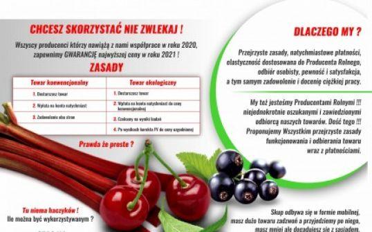 Wiśnia Śliwa Jabłka Malina Rabarbar Porzeczka