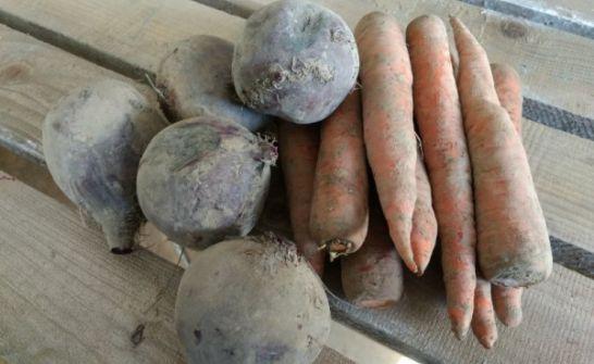 Ekologiczne warzywa-marchw, buraczek ćwikłowy