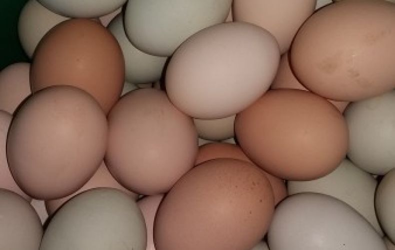 Jaja kurze od zielononóżek