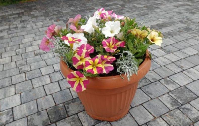 Kwiaty balkonowe i rabatowe