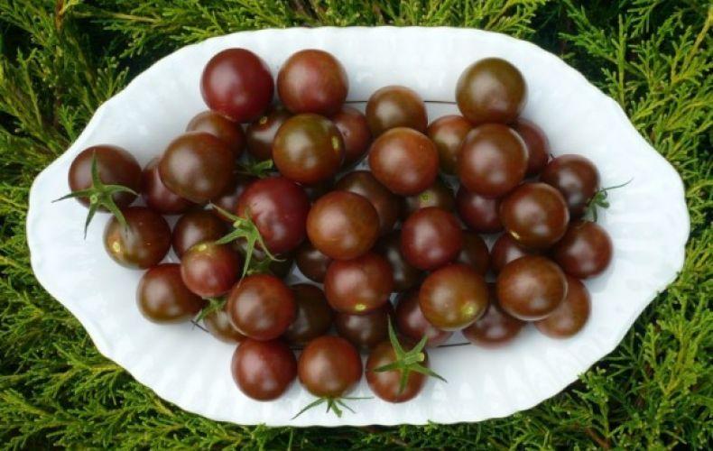 pomidor black cherry