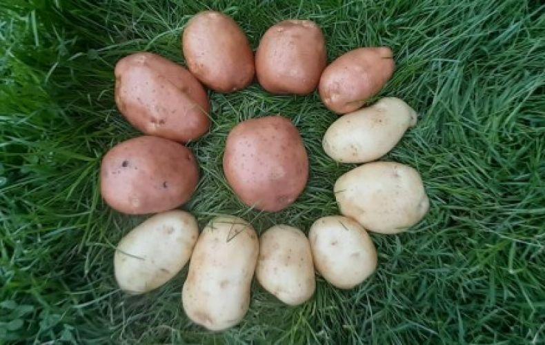 Ziemniak ekologiczny